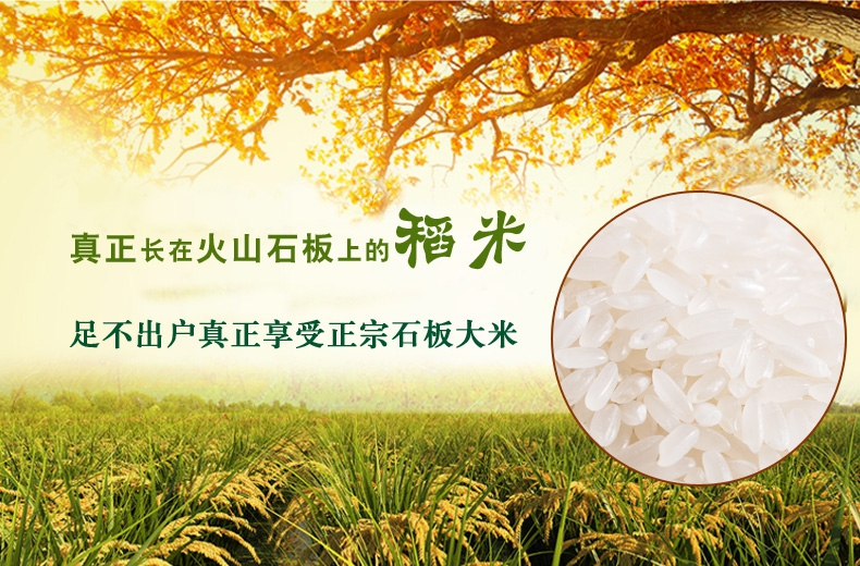 精品石板米